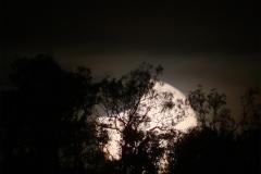 eclisse_gasparri_australia_20121112_3